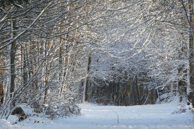 Black Park Buckinghamshire Country Parks